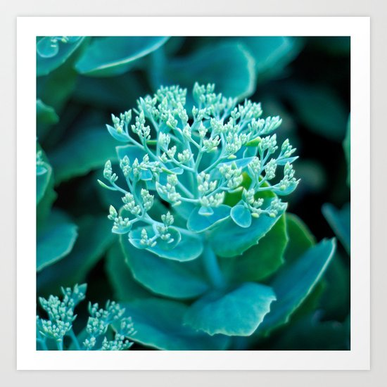 Flower Buds - I Art Print