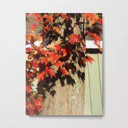 Bright Leaves, Deep Shadows Metal Print