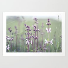 Fields of Velvet Art Print