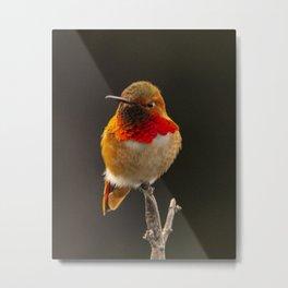 Orange Bronze Hummingbird by Reay of Light Metal Print