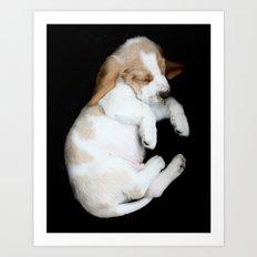 Basset Hound Puppy Art Print