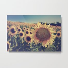 """Sunflowers"" Vintage dreams Metal Print"