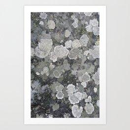 Buzy, Buzy Lichen Art Print