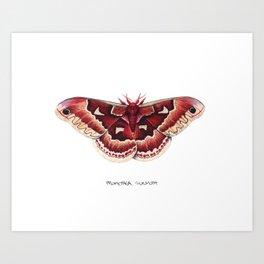 Promethea Silkmoth (Callosamia promethea) Art Print