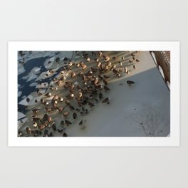 Geese at Dawn on the Charles Art Print