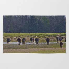 Cattle Rug