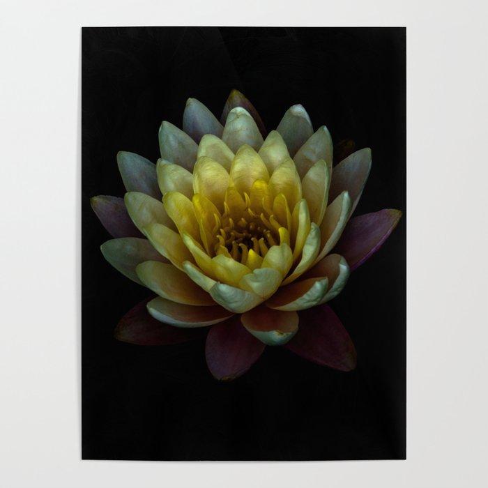 Lotus Flower Poster By Netzauge Society6
