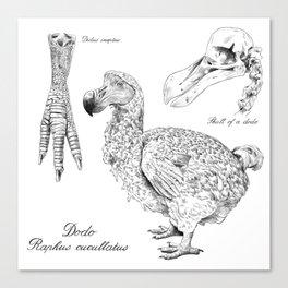 The last Dodo - scientific illustration Canvas Print