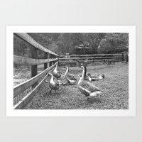 Geese Black & White Photography Art Print