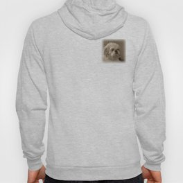 Denali - Loyal Lap-Dog Hoody
