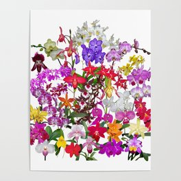 A celebration of orchids Poster