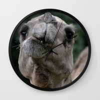 camel Wall Clocks featuring Camel by Gredmonds