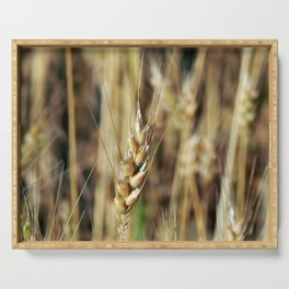 Wheat field texture of hay Serving Tray