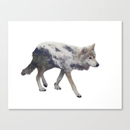 Double exposure of wolf and pine forest on white background Canvas Print