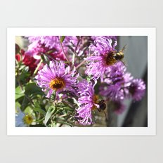 Two Busy Bees on Violet Flowers Art Print