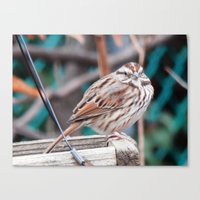 sparrow Canvas Prints featuring sparrow by ACamp