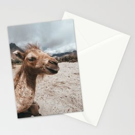Baby Camel in Ladakh Stationery Cards
