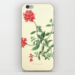 Roscoe, Margaret (1786-1840) - Floral Illustrations of the Seasons 1831 - Verbena Chamaedrifoli iPhone Skin