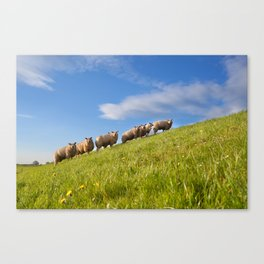 Summer pastoral Canvas Print