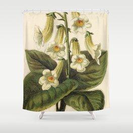 1800s Encyclopedia Print of Flower (Achimenes Amabilis) Shower Curtain