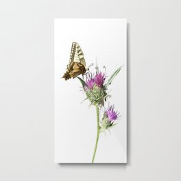 Scarce Swallowtail Butterfly Resting On Thistle Flower Metal Print