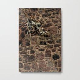 Amazing Optical Illusion Of A Giraffe Metal Print