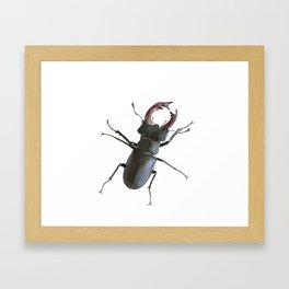 Stag beetle Framed Art Print