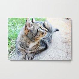 Cat in Sunlight Portrait Photography Metal Print