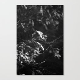 Dead Things Fall Canvas Print