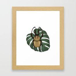 Horned Elephant Beetle Framed Art Print