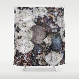 Periwinkles and Barnacles on a rock Shower Curtain