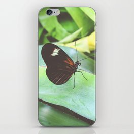 Heliconius Doris Butterfly Photography iPhone Skin