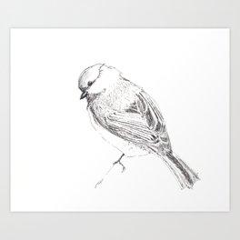 Chicka-Dee-Dee-Dee In Pen Art Print