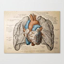 Vintage anatomy illustration Canvas Print