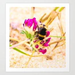 bumble been on a dune flower Art Print