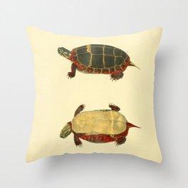 Naturalist Turtle Throw Pillow