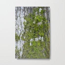 Mossy trunk Metal Print