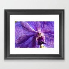 Orchid Vanda 91 Framed Art Print