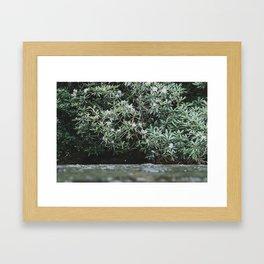 Streams of Living Water 2 Framed Art Print