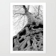 Taking Root Art Print