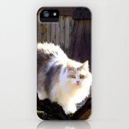 The Beautiful Maine Coon Dilute Calico iPhone Case