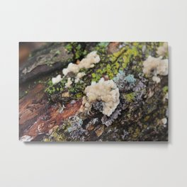 Fungus on a Log Metal Print