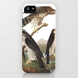 Goshawk, Birds of America, Audubon Plate 141 iPhone Case