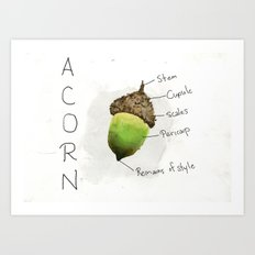 Diagram of an Acorn Art Print
