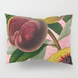 Vintage Botanical Collage, Bradford Peach Pillow Sham
