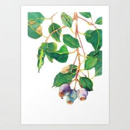 Australian Gumnuts Watecolour Art Print