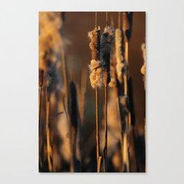Cattails in winter Canvas Print