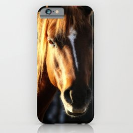 Golden Arabian Pony Portrait iPhone Case