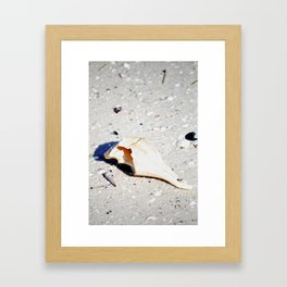 Timid Framed Art Print