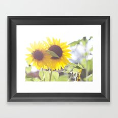 August Sunflower Framed Art Print